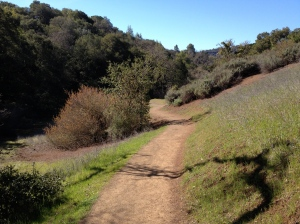 The Wildcat Loop Trail at the Rancho San Antonio Open Space Preserve offers a little bit of everything—meadows, woods, single-track, and plenty of climbs.